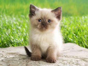 Cómo acercarse a un gato herido sin peligro ni ahuyentarle