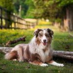 Cómo actuar ante una picadura de alacrán en perros
