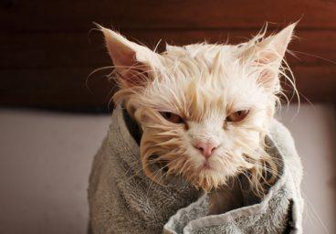 Cómo bañar a un gato de forma fácil en casa