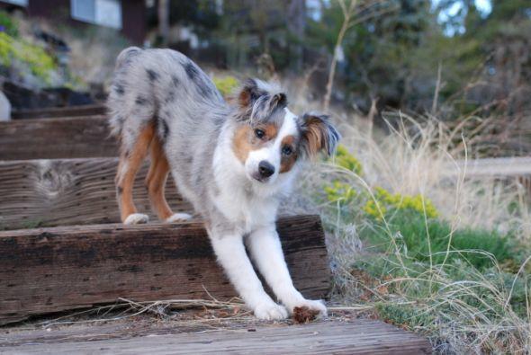 Cómo conseguir que tu perro pierda el miedo a las escaleras