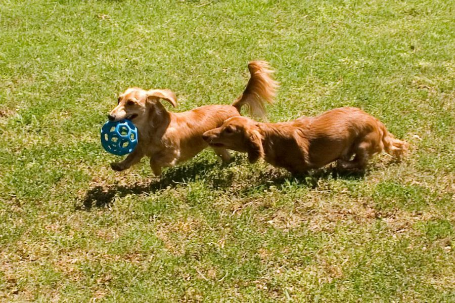 Cómo prevenir la picadura de alacrán en perros