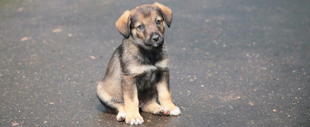 Cómo puedes ayudar a perros abandonados