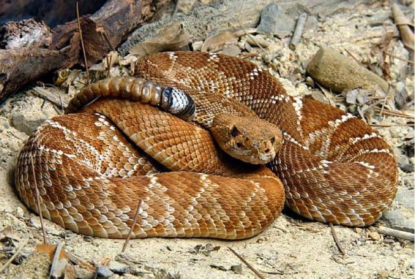Cómo se mueven las serpientes