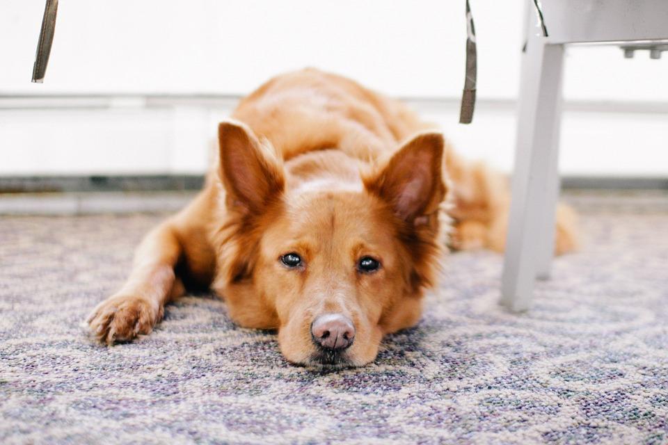 Cómo se tratan los síntomas de la artrosis en perros