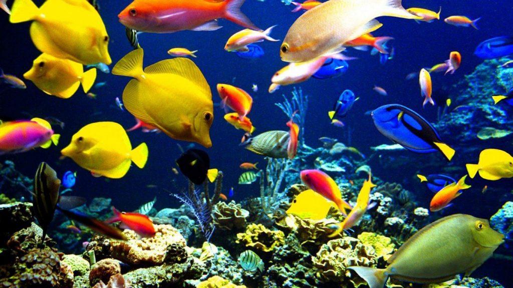 Cómo son los peces de agua salada y qué necesitan