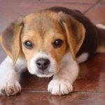 Causas de la agresividad canina