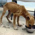 Causas de la anorexia canina