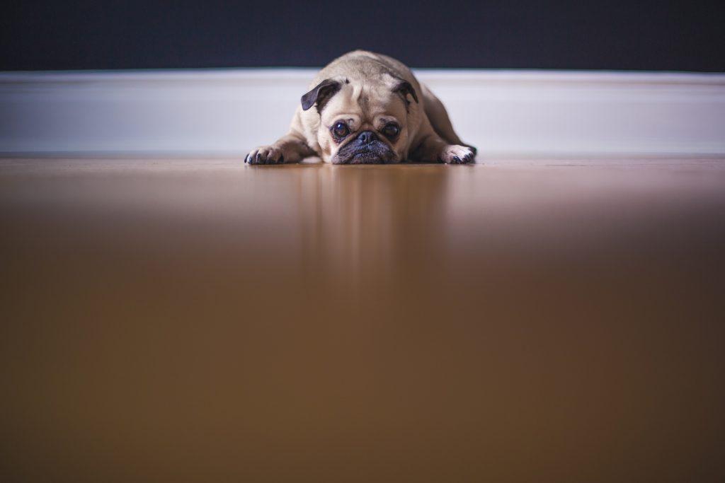 Causas de la artritis canina