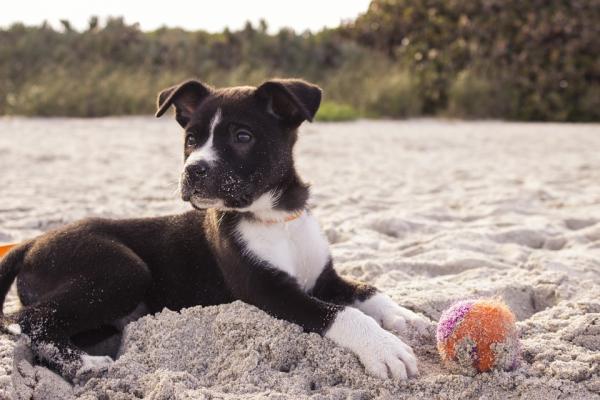 Causas de las convulsiones en perros