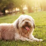 Ceguera en los perros