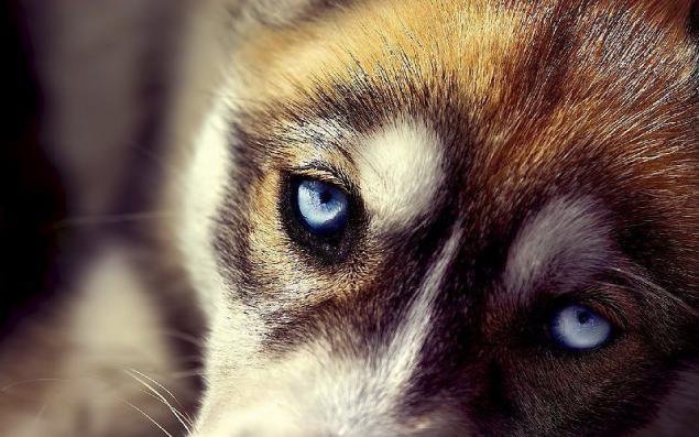 Consejos básicos para ayudar a un perro que tiene un resfriado común