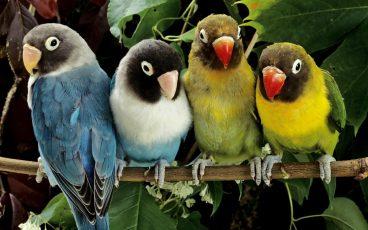 Consejos clave para el cuidado de aves