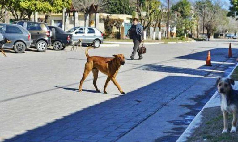 Consejos para enseñar a mi perro a cruzar la calle