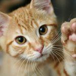 Consejos para llevarte bien con tu gato