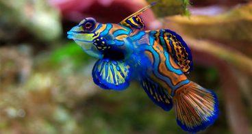 Cuidados para los peces tropicales en acuario