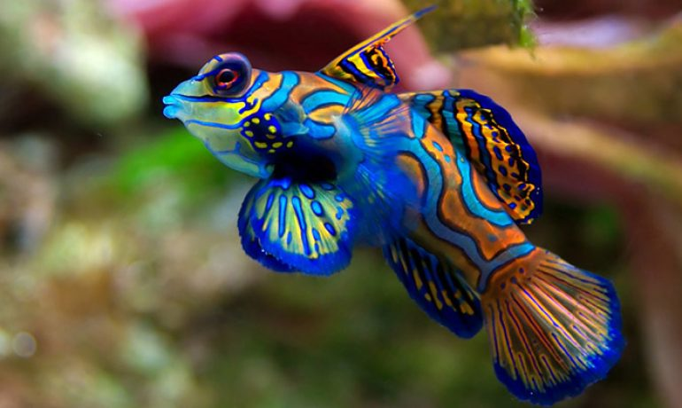 Cuidados para los peces tropicales en acuario for Clases de peces de acuario