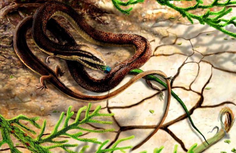 Descubre a la impresionante serpiente de 4 patas hallada en Brasil