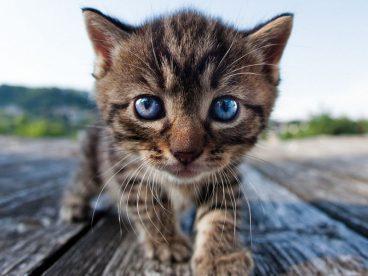 Descubre cómo se comportan los gatos