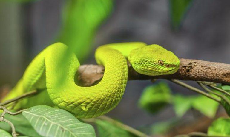 Descubre cómo se mueven las serpientes