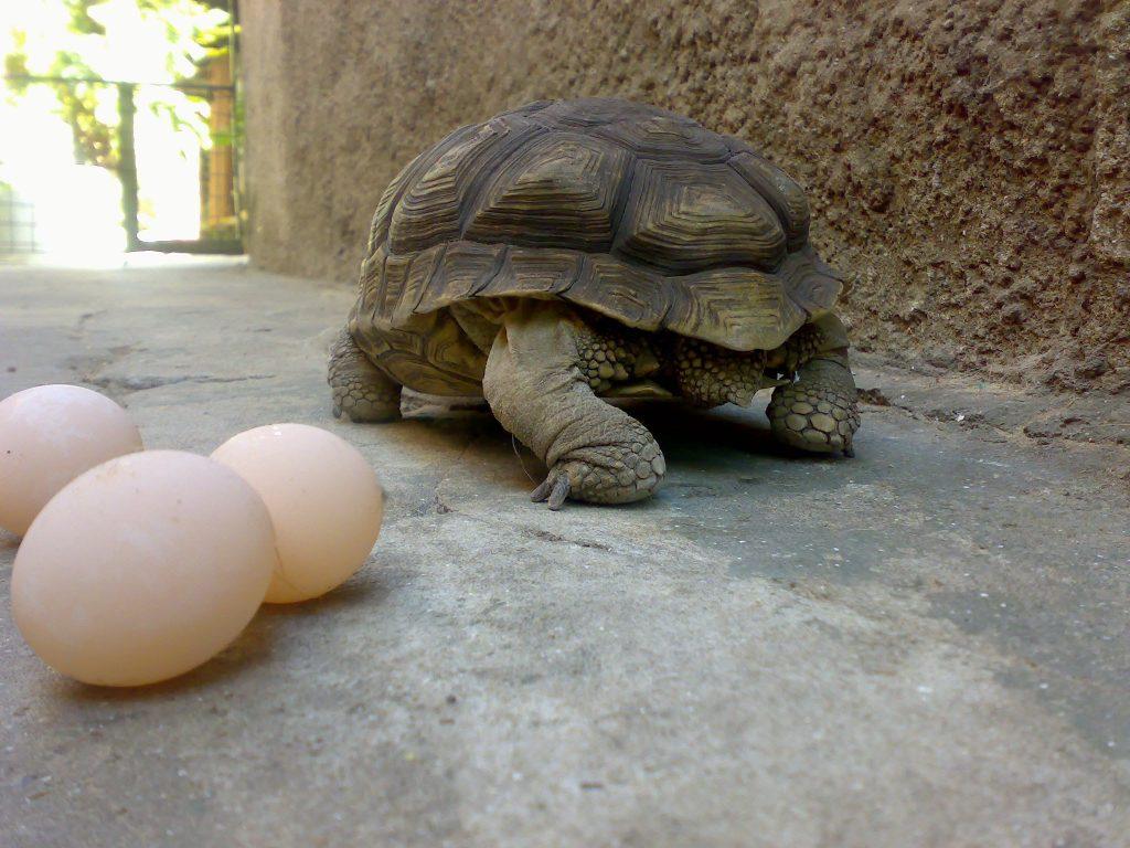 Descubre cómo se reproducen las tortugas