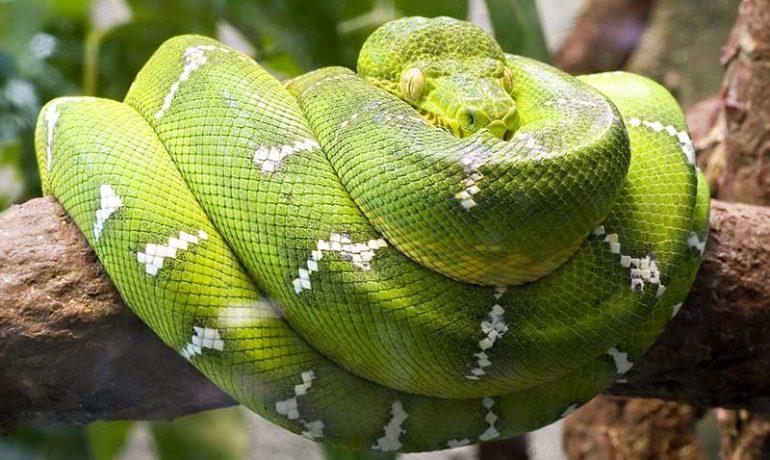 Descubre la alimentación de las serpientes