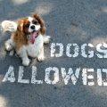 Descubre los mejores lugares dog-friendly de Barcelona
