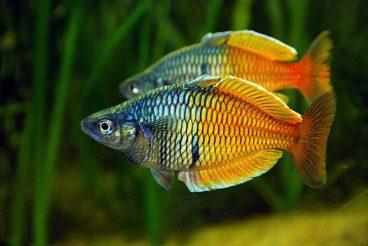 Descubre los principales peces para principiantes