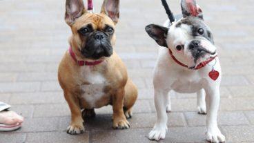 Descubre los remedios caseros para el resfriado en perros