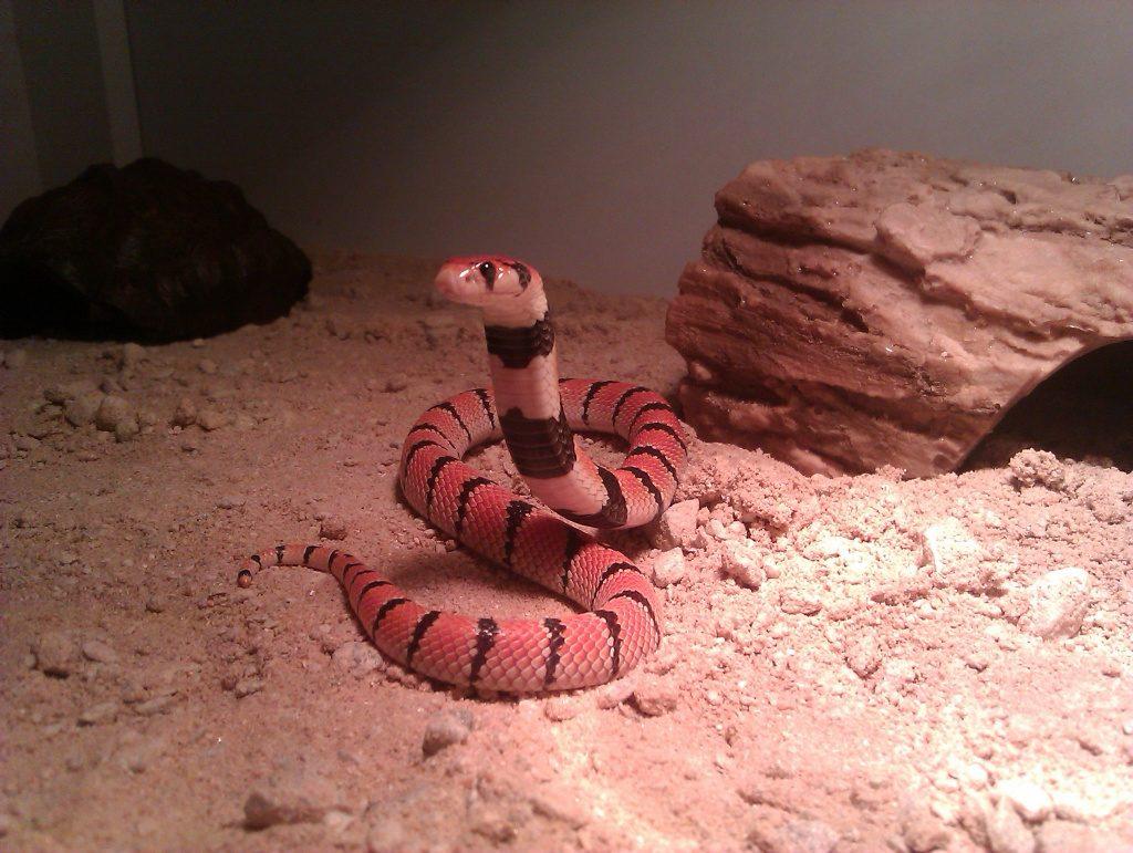 El movimiento de las serpientes