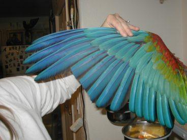 El recorte de plumas