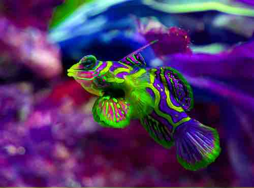 Los principales peces de agua salada que puedes tener en for Peces ornamentales acuarios