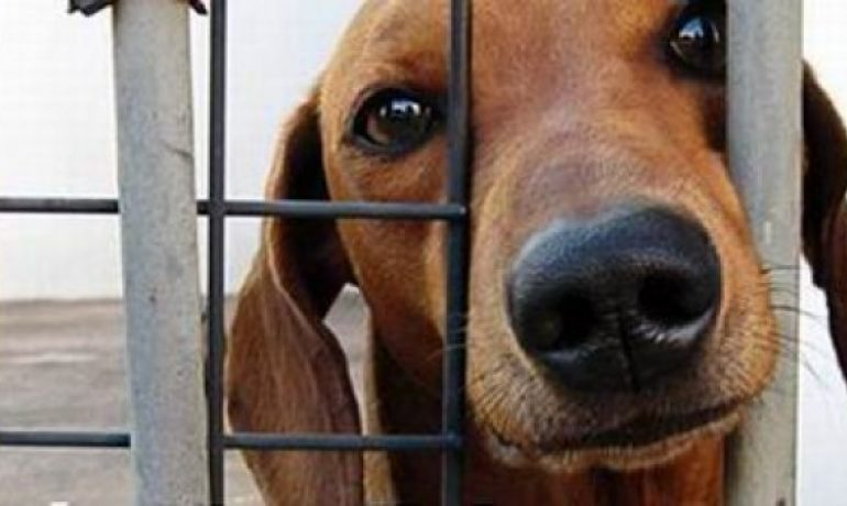 En Semana Santa aumentó el número de perros abandonados