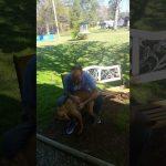 Este perro no reconoce a su dueño después de adelgazar 20 kilos