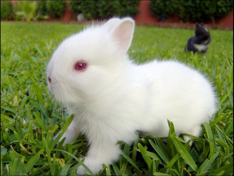 Esto es lo que NO debe comer tu conejo