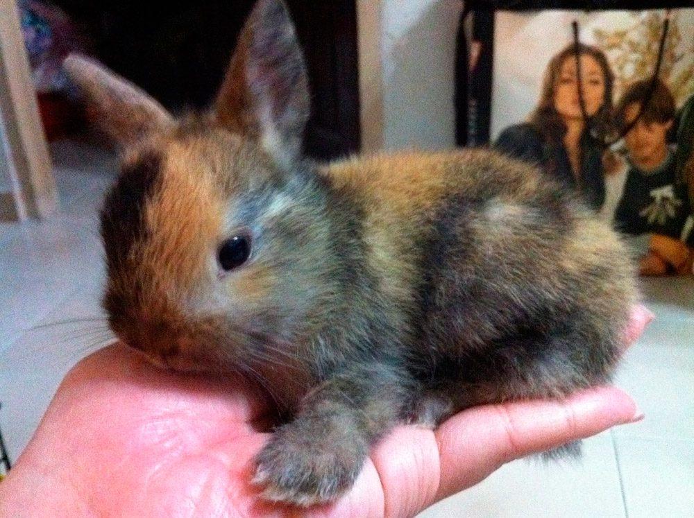 Esto es lo que NO debes dar a tu conejo