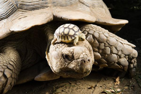 Esto es lo que NO debes dar a tu tortuga de tierra