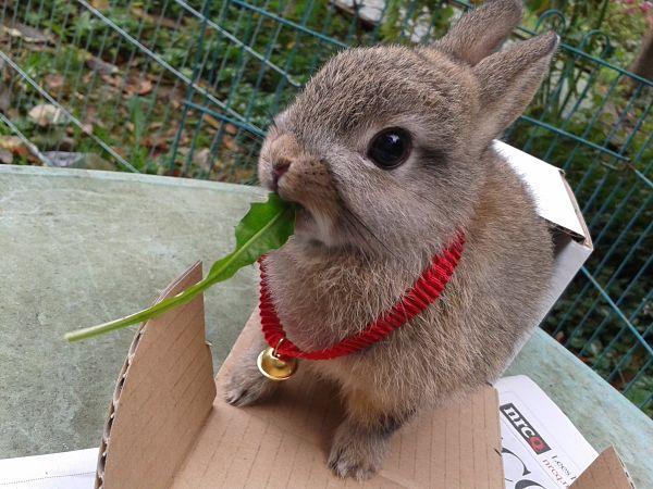 Expresión corporal del conejo enano
