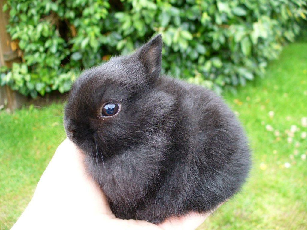 Higiene y cuidados del conejo enano
