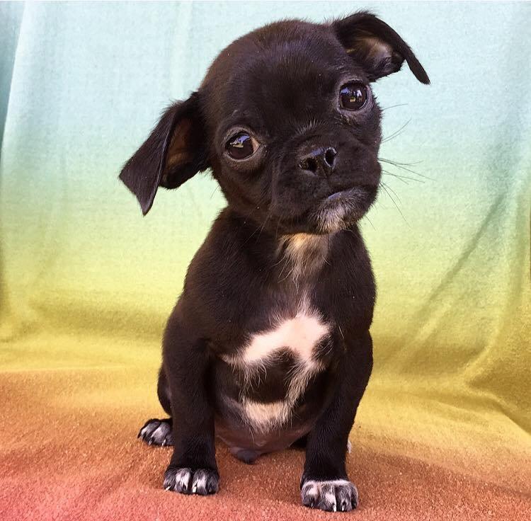 Hilary Duff adopta a un perro que nadie quería