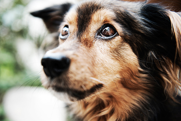 La adopción de un perro
