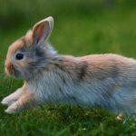 La alimentación del conejo