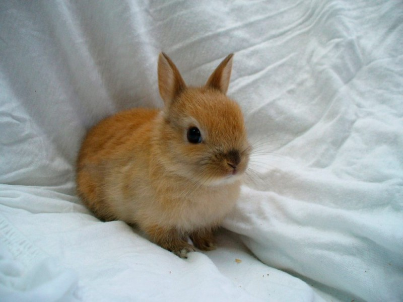 La jaula y el ambiente del conejo enano