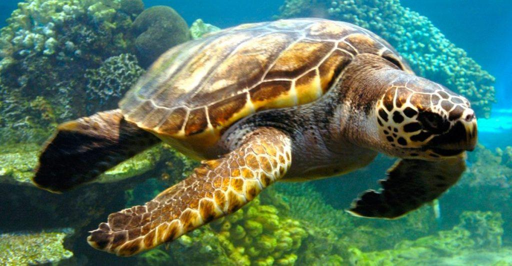 La tortuga verde