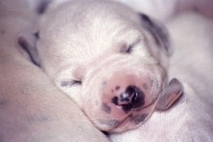 La vista de los cachorros al nacer
