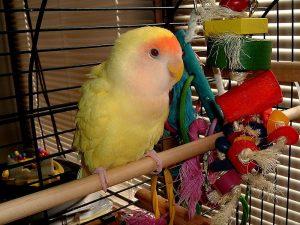 Las mejores aves para nuestro hogar