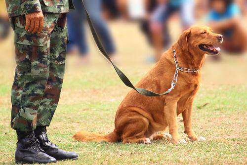 Los perros anti-pirómanos