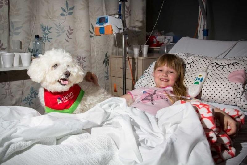 Los perros pueden curar los dolores físicos de los niños