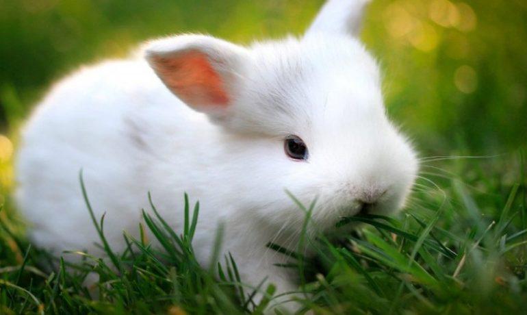 Mi conejo pierde mucho pelo