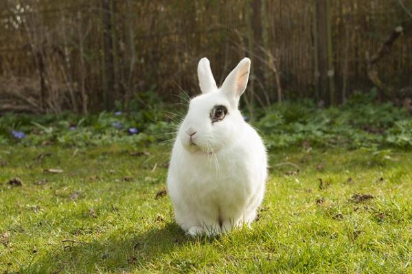 Mi conejo pierde mucho pelo por una infección dermatológica
