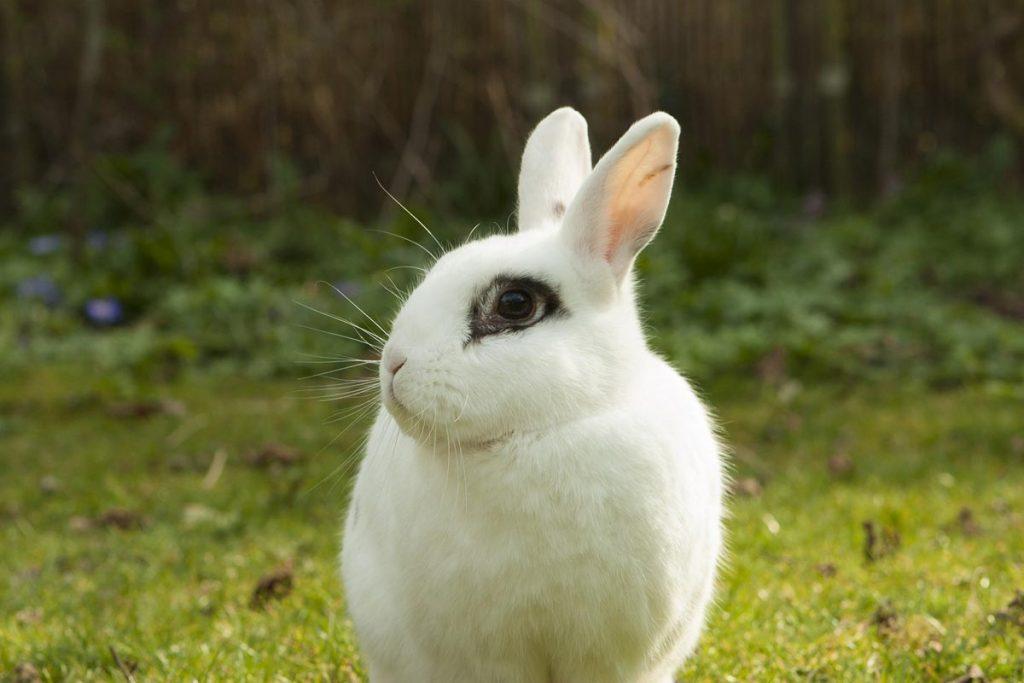 Mi conejo pierde mucho pelo por una nutrición deficiente